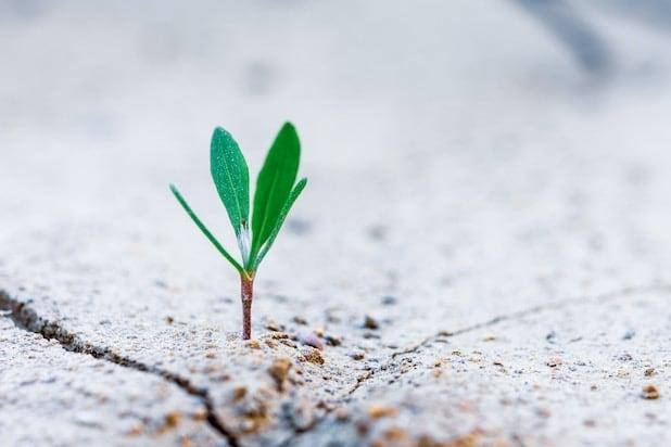 Kleine Pflanze spriesst aus trockenem Boden