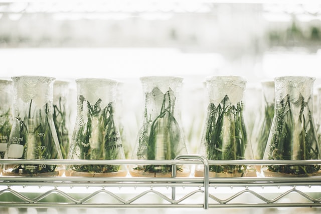 Im Labor gezüchtete Pflanzen